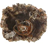 """Petrified Wood Slab, a Polished Fossil Stone Tree Specimen Slice from Madagascar, Each Piece Different for a Unique Gift, Medium 2 1/2""""-4"""" Size"""