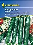 Sperli Gemüsesamen Gurken Saladin