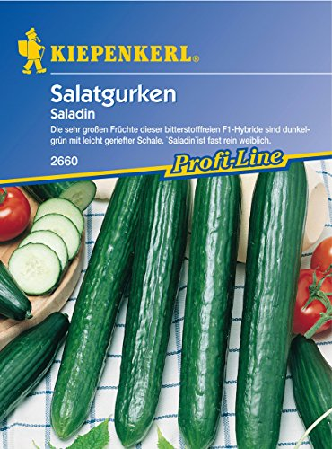 Sperli Gemüsesamen Gurken Saladin, F1, grün
