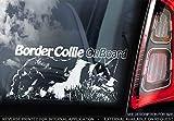 Sticker International Border-Collie - Autoaufkleber - Hund Schild Fenster, Stoßstange Aufkleber Geschenk - V002 - Weiß/Klar - Externe Außen Aufdruck, 210x100mm