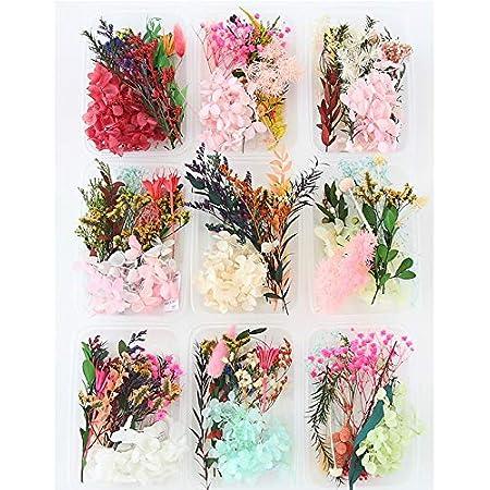 geneic 1 Box echte Mischung getrocknete Blumen f/ür Aromatherapie Kerze Harz Schmuck Trockenpflanzen gepresste Blumen Basteln DIY Zubeh/ör