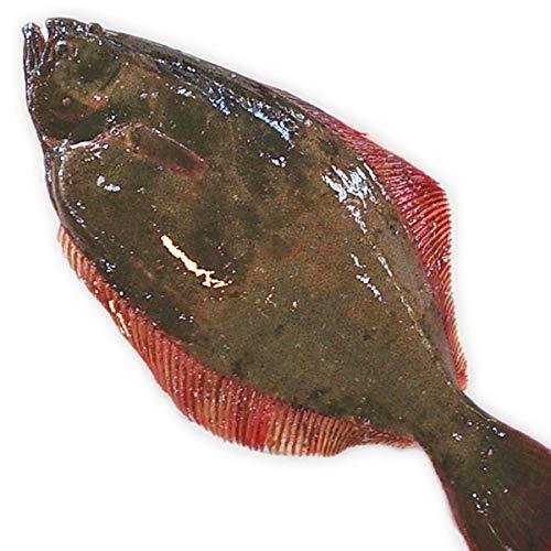 魚水島 天然ヒラメ 平目 日本海産 3.5〜3.9キロ物