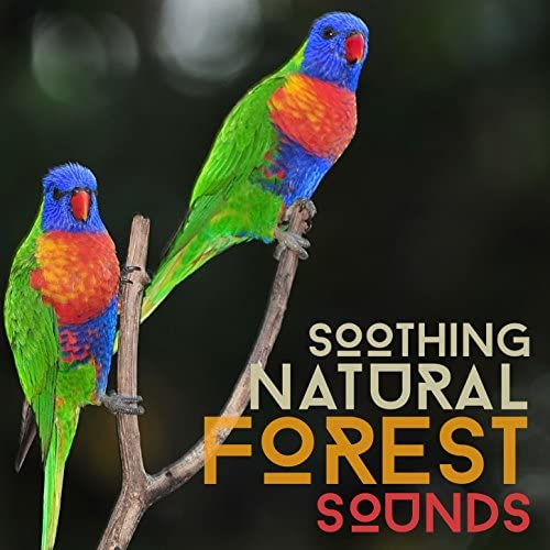 Forest Sounds Relaxing Spa Music Singing Birds