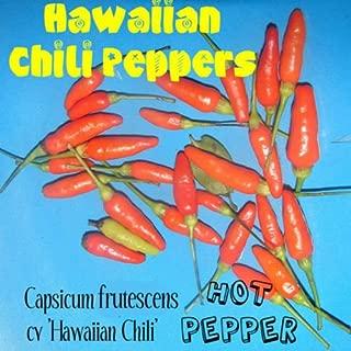 HOT HAWAIIAN CHILI PEPPER~ Capsicum frutescens cv Hawaiian Chili 60 Seeds