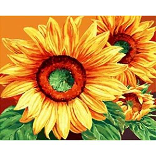 ZXDA Frameless DIY Pintura por número Flor Pintura al óleo Pintada a Mano Dibujo sobre Lienzo decoración del hogar A16 50x65cm