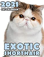 Exotic Shorthair 2021 Cat Calendar