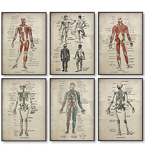 DLFALG Conjunto de póster de anatomía, esqueleto médico, cuerpo humano, músculo, póster vintage, educación, lienzo, arte de pared, imagen impresa, decoración del hogar, 40x50cmx6 sin marco