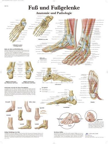 3B Scientific Lehrtafel - Fuß und Fußgelenke - Anatomie und Pathologie, VR0176UU
