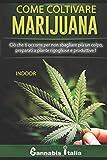 Coltivare cannabis indoor: Preparati a piante rigogliose e produttive!