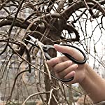 VISEMAN Japanese Bonsai Pruning Scissors-KinTakashi Gardening Shears for Bonsai Trimming 10 Made of high quality medium carbon steel,finer and lighter than other scissors Cut obliquely when you need to make precise cuts and do not cut dry branches.Suitable for quick and long trimming of small branches. Looped shaped handle allows for a less tiring user experience for a more ergonomic control.