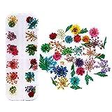 JINGGEGE Jengijo Colores Flores secas-Mix de Flores secas de la Flor for Nail Art Decoración de uñas Natural Mixta Flores secas Flor Adornos de manicura Accesorios (Color : 10)