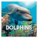 Erik Wandkalender Delphine - Kalender 2021 für 16 Monate