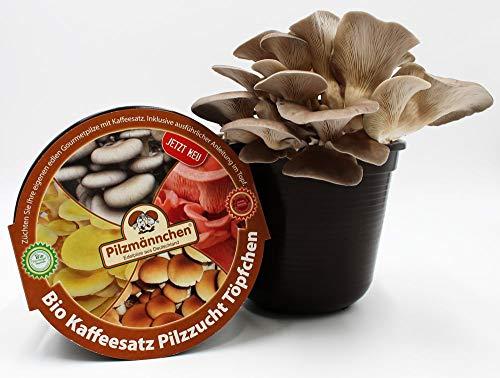 Bio Austernpilz Kaffeesatz Töpfchen für die Pilzzucht - eigenen Kaffeesatz verwerten und frische Pilze züchten