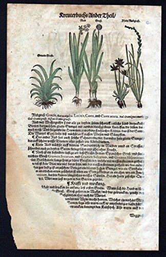 Pfahlrohr Gras Gräser Holzschnitt Kräuterbuch Kräuter herbal