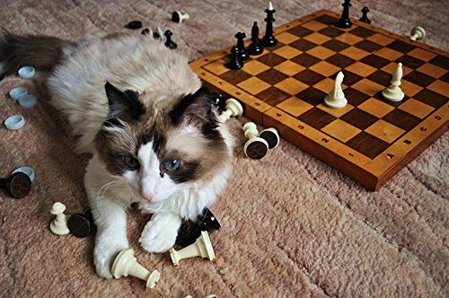 Lsping Puzzle con Foto 1000 pezzi Gatos Ajedrez Ajedrez Jugador Animal 50x70cm