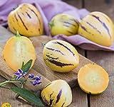 Znadna Seeds - 100pcs Rare Melon Pear Seeds Mini Pepino Fruits Fruits & Vegetables Seeds House Bonsai Plant for Garden Balcony/Patio
