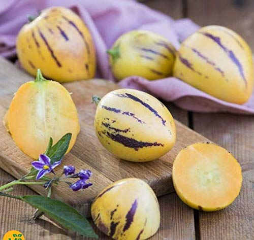 Soteer Garten - 100 Stück exotische Melonenbirne Samen Mini Zuckermelone GVO-Bio-Obst Früchte Samen Haus Bonsai Pflanze für Garten Balkon/Terrasse