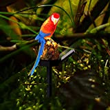 ALLOMN Solar Rasenlampe, Draussen Sonnenlicht Gartendekoration Lampe Wasserdichte Pfad Rasen Garten Gartenlampen Papagei Design