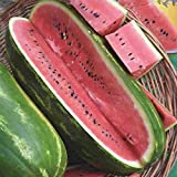 Jubilee Sweet Watermelon Seeds, 75+ Premium Heirloom Seeds,Giant Long Watermelons Full of Flavor!, Popular & Top Seller!, (Isla's Garden Seeds), Non GMO, 85% Germination Rates, Highest Quality