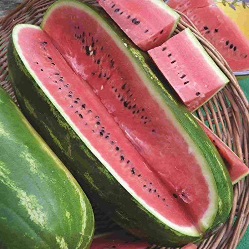 Jubilee Sweet Watermelon Seeds, 75 Heirloom Seeds Per Packet, Non GMO Seeds
