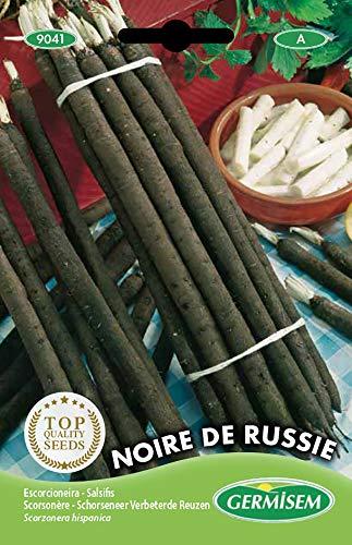 Germisem Schwarzwurzeln NOIRE DE RUSSIE