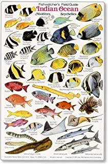 INDIAN OCEAN: Fishwatchers Fish Guide for Maldives, Seychelles, Kenya