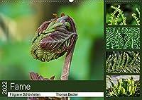 Farne - Filigrane Schoenheiten (Wandkalender 2022 DIN A2 quer): Farne - Faszinierende Pflanzen (Monatskalender, 14 Seiten )