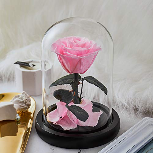 Eterfield Preserved Real Rose Handmade Eternal Rose in Glass Doom Gift for Her Valentine's Day Mother's Day Anniversary Birthday (Small, Pink)