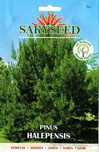 ScoutSeed 20 Semi/Seeds PINUS HALEPENSIS