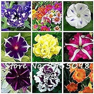 Prime 20 Seeds Petunia kabloom calibrachoa, Mixed Seeds Flower Seeds, Morning Glory, Pot Plant for Home Garden