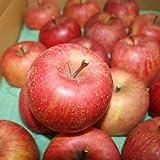 サンふじ Cランク 家庭用 約10kg 訳あり 28玉~36玉 長野県産 りんご 糖度13度以上