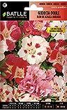 Semillas de Flores - Godecia doble flor de azalea variada - Batlle