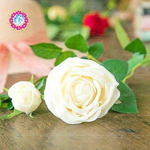 100pcs coloré Graines Rose avec bord rouge, couleur rare jardin populaire Graines de fleurs vivaces Bush ou Bonsai Fleur 2
