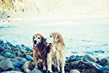Wooden Adultos Personalizado De Madera Montaje Rompecabezas-Lago Animales Perros mascotas-1000 Piezas