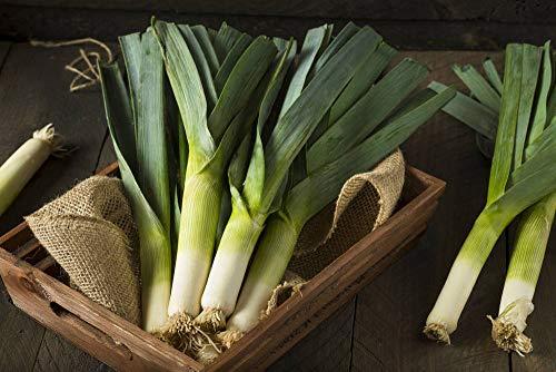 Semi di aglio Scalogno sempreverde Cipolla bianca lunga Giardino Verdura Foglia biologica Semi freschi per piantare 10g Circa 3000 + Interno o esterno per condimento piatto da cucina a pesce