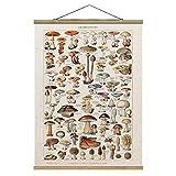 Stoffbild Posterleisten Vintage Lehrtafel Pilze Hochformat