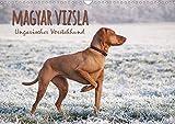 Magyar Vizsla,  Ungarischer Vo...