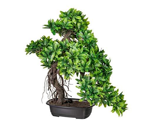 Kunstpflanze Bonsai Ruscus im Kunststofftopf mit Einer Höhe von 57cm - künstliche Bonsai Pflanzen Kunstpflanzen Dekopflanzen asiatische Dekoration Thai Deko China Dekorationen