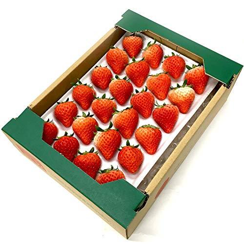 国産 夏いちご 300g L~Mサイズ (24~30粒) 1トレー サマープリンセス サマーリリカル すずあかね 紅ほっぺ 苺 イチゴ 果物 フルーツ ギフト ストロベリー 業務用