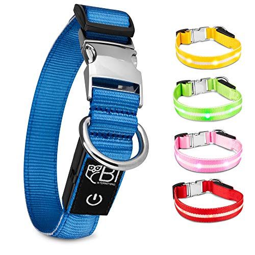 BI International ® Hundehalsband Leuchtend & Aufladbar – Wasserdichtes LED Leucht–Halsband für Hunde aus Verstärktem Nylon - Hochwertig & Sicher Dank Innovativem Metallverschluss