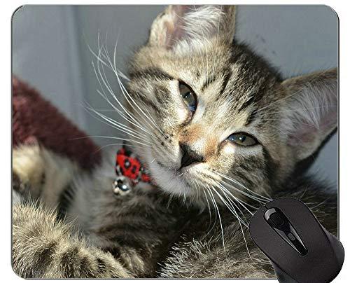 Yanteng Alfombrillas de ratón, Linda Alfombrilla de ratón exótica de Gato de Pelo Corto Personalizada, Alfombrilla de ratón de Gatito con Borde Cosido