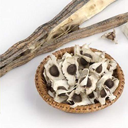 CFPacrobaticS 50 Stück Gesunde Moringa Oleifera Samen Gesundheit Haut Vorteile Drumstick Baum Samen Leicht Wachsen, Home Farm Hof Pflanzen, Dekoration Garten Geschenke