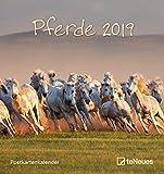 Pferde 2019 - Postkartenkalender, Tierkalender, Pferdekalender 2019  -  16 x 17 cm