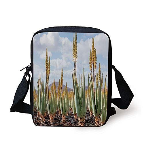 FAFANIQ Plant,Photo from Aloe Vera Plantation Medicinal Leaves Remedy Fuerteventura Canary Islands...