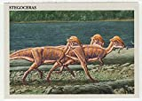 Stegoceras - Dinosaurs: The Mesozoic Era (Trading Card) # 33 - Redstone Marketing 1993 Mint