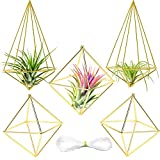 Farielyn-X 5 Packs Gold Air Plant Holder Mini Metal Tabletop Himmeli Decor Modern Geometric Planter Tillandsia Air Fern Display Stand for Home, Office and Wedding Gift Idea(2 Styles)
