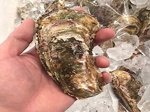 殻付き牡蠣 カキ 生食用 三陸 山田湾 約150-200g 特大サイズ 計10個 真牡蠣 マガキ【山田カキ30x10】 冷蔵