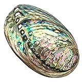 Gran Abalone, de concha marina Multihole decorativo manchas Abalone Shell fiesta boda casa decoración accesorios 90x 120x 39mm orificio: aprox. 3–9mm
