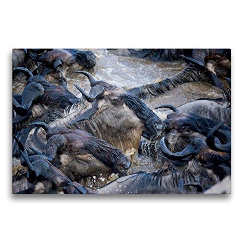 CALVENDO Premium Textil-Leinwand 75 x 50 cm Quer-Format Emotionale Momente: Die große Gnuwanderung, Leinwanddruck von Ingo Gerlach