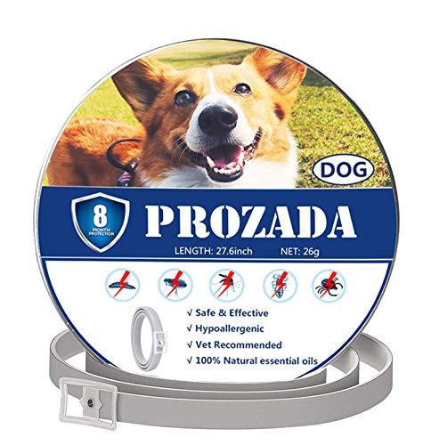 PROZADALAN Collare Antipulci Cane (8 Mesi) Prevenzione Pulci e Zecche - con Estratti di Oli Essenziali - Ipoallergenico Taglia Unica per Tutti i Cani (70cm)